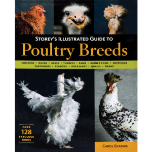 poultry-breeds