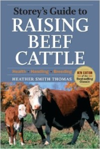 raising-beef-cattle